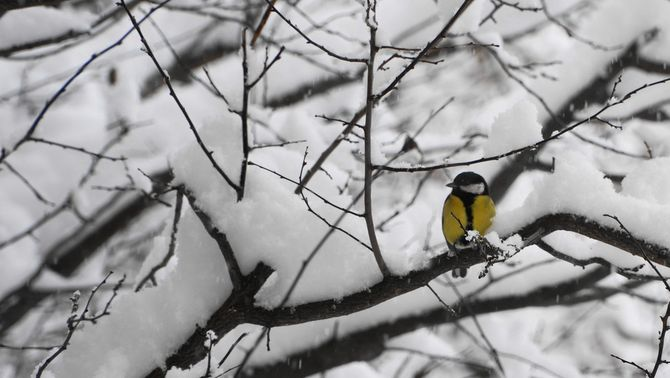 Desembre nevat a Sispony, la Massana. Foto: Joan Carles Miralles.