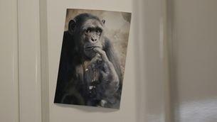 Un pòster d'un mico