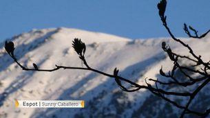 La neu torna al Pirineu