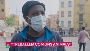 """Els temporers: """"Treballem com uns animals"""""""