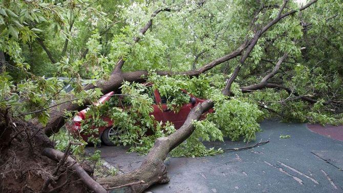 Un arbre caigut pel fort temporal de maig a Moscou (Reuters)