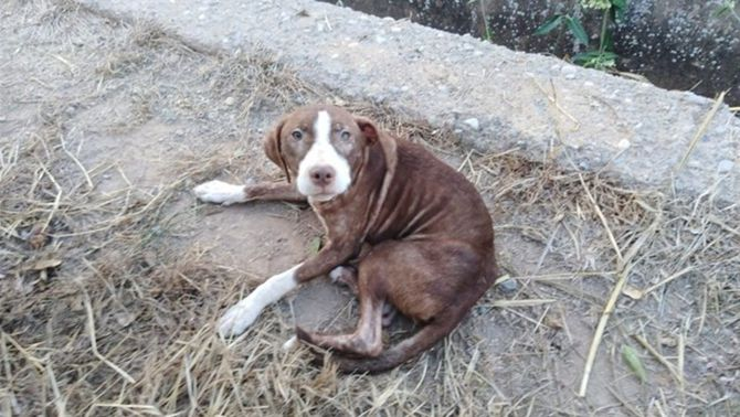 La gossa que va protegir un avi amb alzheimer (Ajuntament de Borriana)