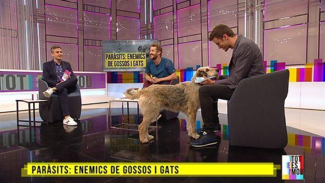 Paràsits: enemics de gossos i gats