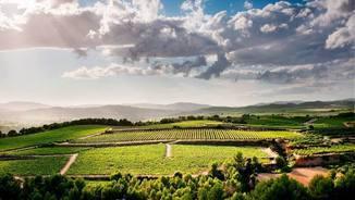 Enoturisme: experiències entre vinyes