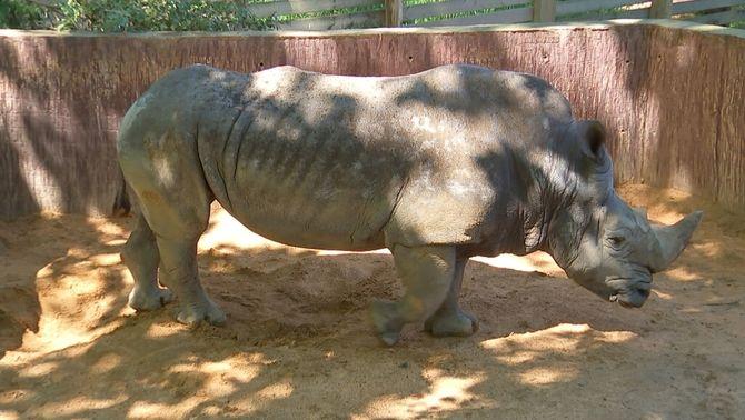 El Zoo de Barcelona té tres anys per decidir el futur de totes les espècies