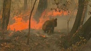 Més de mil milions d'animals han mort a Austràlia pels incendis