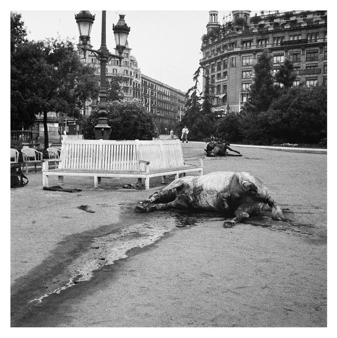 'Cavalls morts', 1936
