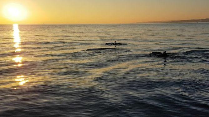 Posta de sol amb dofins al Garraf