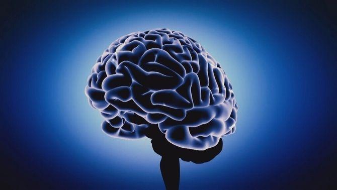 Què són les neurones mirall?