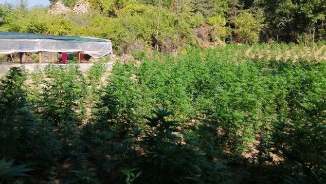 Una de les zones de cultiu de marihuana, prop del pantà de la Llosa del Cavall (ACN)