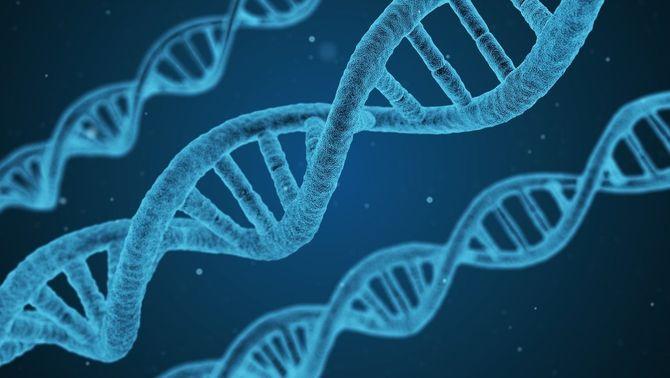 Recerca genòmica: Ser home o dona fa diferents gairebé tots els òrgans del cos