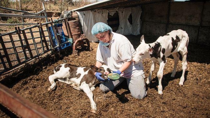 Les dones del sector agroalimentari guanyen un 23% menys que els homes