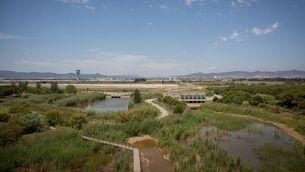 L'espai natural protegit de La Ricarda, al Prat de Llobregat, amb l'aeroport al fons (Europa Press / David Zorrakino)