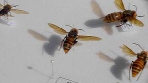 Insectes que ens donen ales