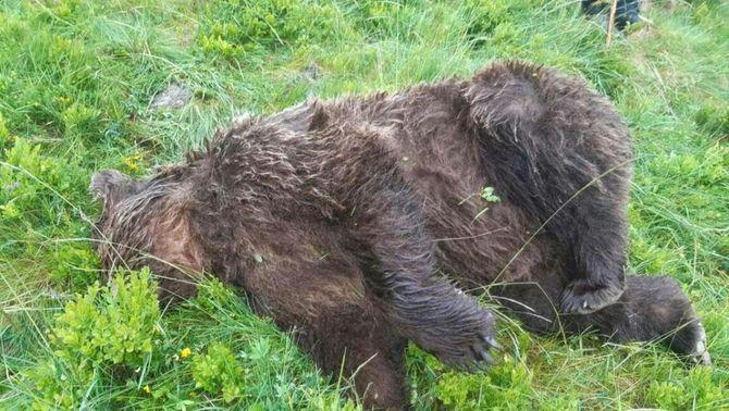 Troben un os abatut a trets a la zona de l'Arieja, a França