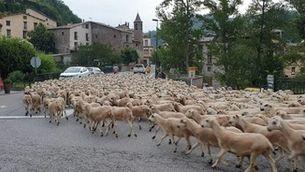 Temps de transhumància al Pallars Jussà