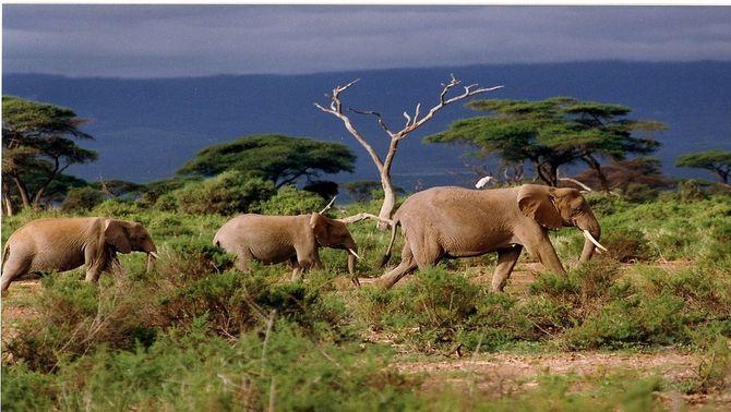 La sisena extinció d'espècies massiva està en marxa i és una greu amenaça