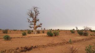 Pla general de la Gran Muralla Verda de l'Àfrica