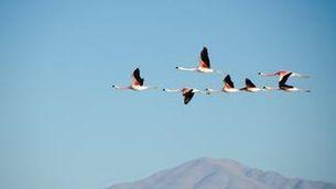 Per què els pols magnètics afecten ocells, GPS i avions?