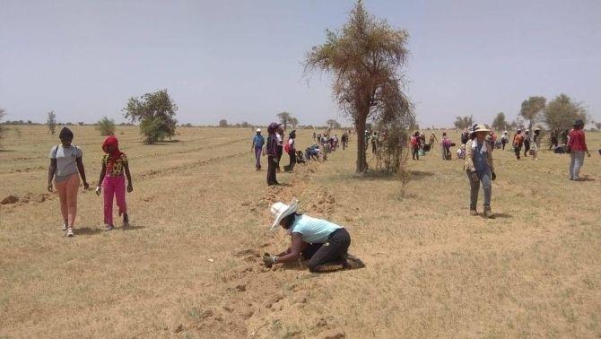 Plantant a la Gran Muralla verda de l'Àfrica