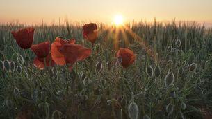 Sortida del sol al Vallès Oriental (Enric Navarrete)