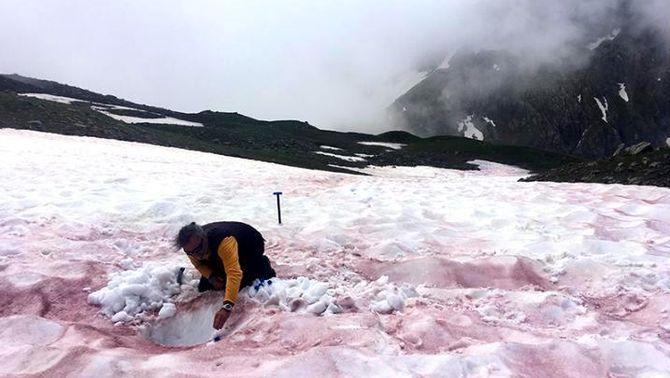 La sang de les glaceres: quan la neu es tenyeix de vermell