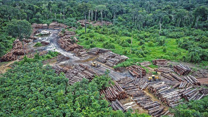 """L'ecocidi, la proposta de nou delicte per """"causar danys greus"""" al medi ambient"""