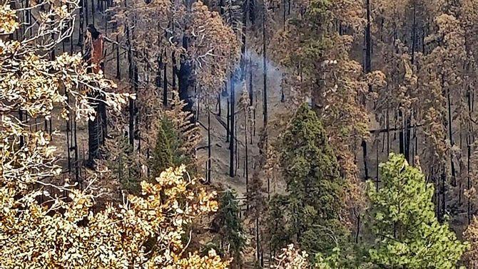 Descobreixen una sequoia que fa nou mesos que crema en un parc nacional dels EUA