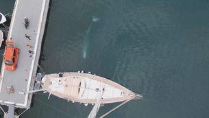 Balena a vista de dron