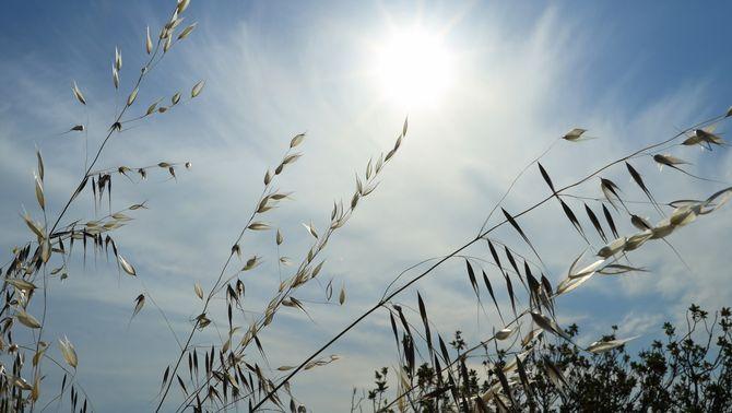 Darrer dia de calor sufocant, amb pocs ruixats