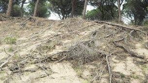 Catalunya haurà d'adaptar-se a més onades de calor i grans incendis forestals