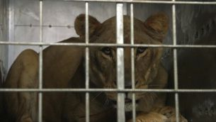 Zoo de Gaza
