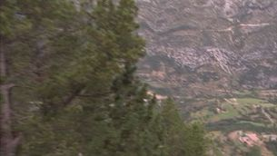 Un llop ataca un ramat i mata 3 ovelles a Odèn, al Solsonès