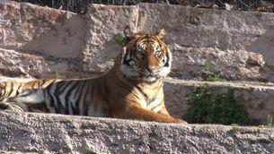 Nou model del Zoo de Barcelona
