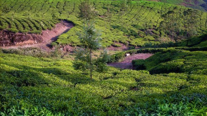 L'impacte del nostre consum de cafè, cacau o carn en la desforestació de boscos tropicals
