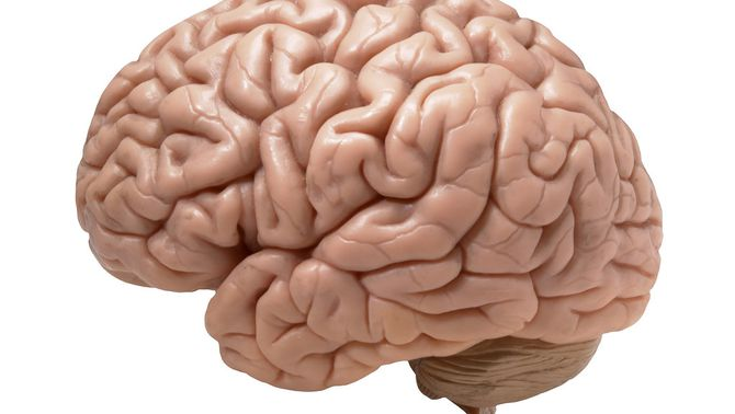 Google i Harvard creen el primer mapa detallat del cervell, un fragment d'1,4 petabytes