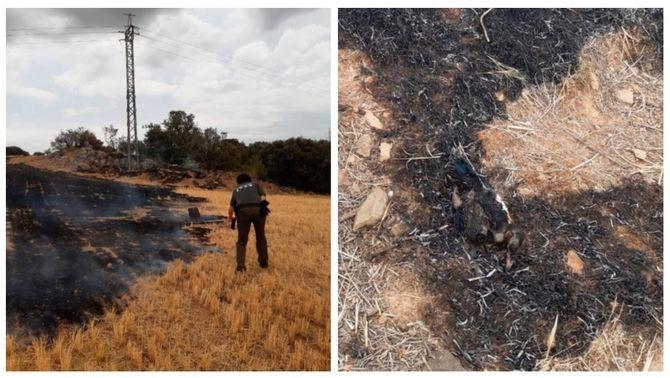 L'incendi de Cubells, que ha afectat 1,5 hectàrees, el pot haver provocat aquesta garsa en caure després d'electrocutar-se