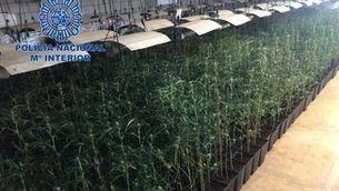 Tots els policies de la unitat antidroga de Mèrida, detinguts per tràfic de marihuana