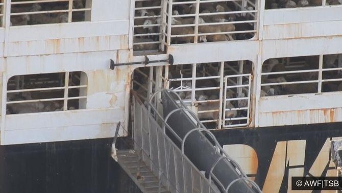 Un vaixell amb centenars d'animals al seu interior