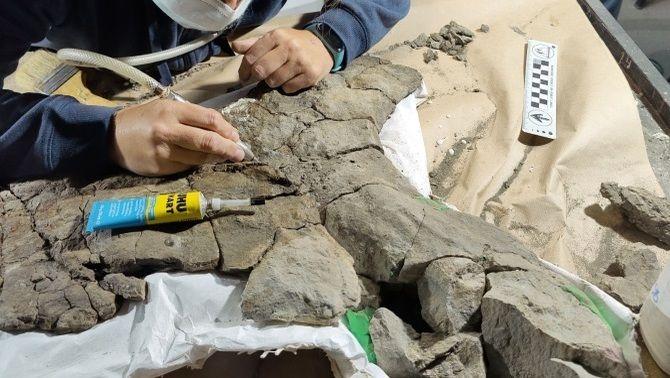 Troben el fòssil de tortuga marina més gros d'Europa al jaciment de Coll de Nargó
