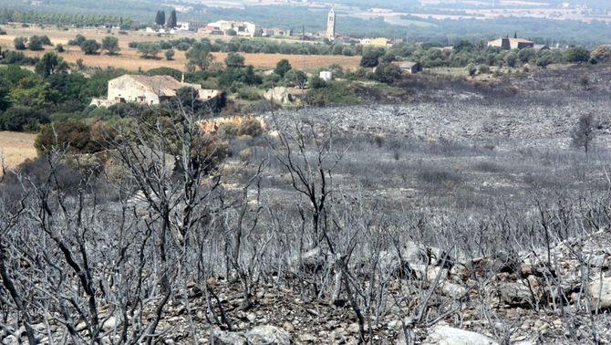 Què s'ha de fer amb els boscos cremats?
