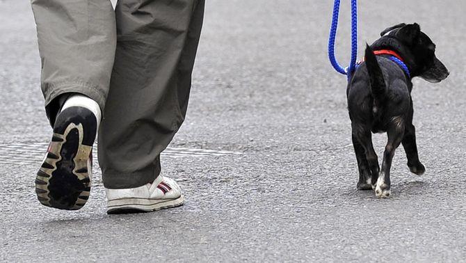 Investigadors catalans ensinistren gossos per detectar la hipoglucèmia