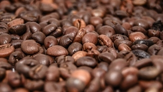 Imatge de:Cafè d'especialitat: una infusió d'altíssima qualitat que cal prendre sense sucre