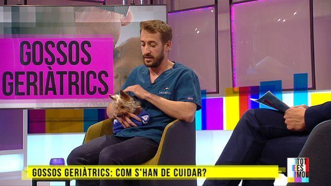 Gossos geriàtrics: com tenir-ne cura
