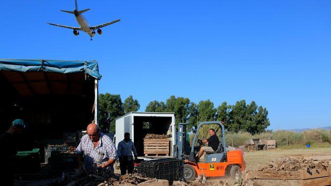 Un avió sobrevola un camp al Prat de Llobregat