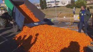 Pagesos de les Terres de l'Ebre reclamen ajudes pels cítrics