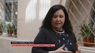 """Maria Àngels Calvo: """"El gran problema és que l'enemic que tenim ara és un enemic que no veiem"""""""