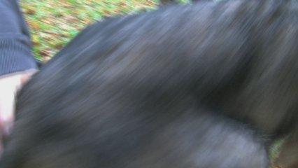 El medi ambient: El llop a l'escola