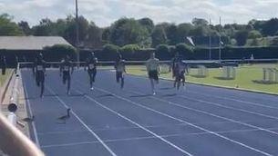 Estan a punt d'arribar a meta en una cursa de 200 metres... i es creuen dos ànecs!