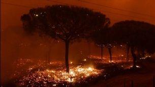 El vent i les altes temperatures dificulten l'extinció de l'incendi de Doñana
